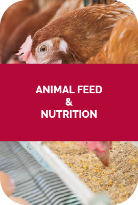 AnimalFeed