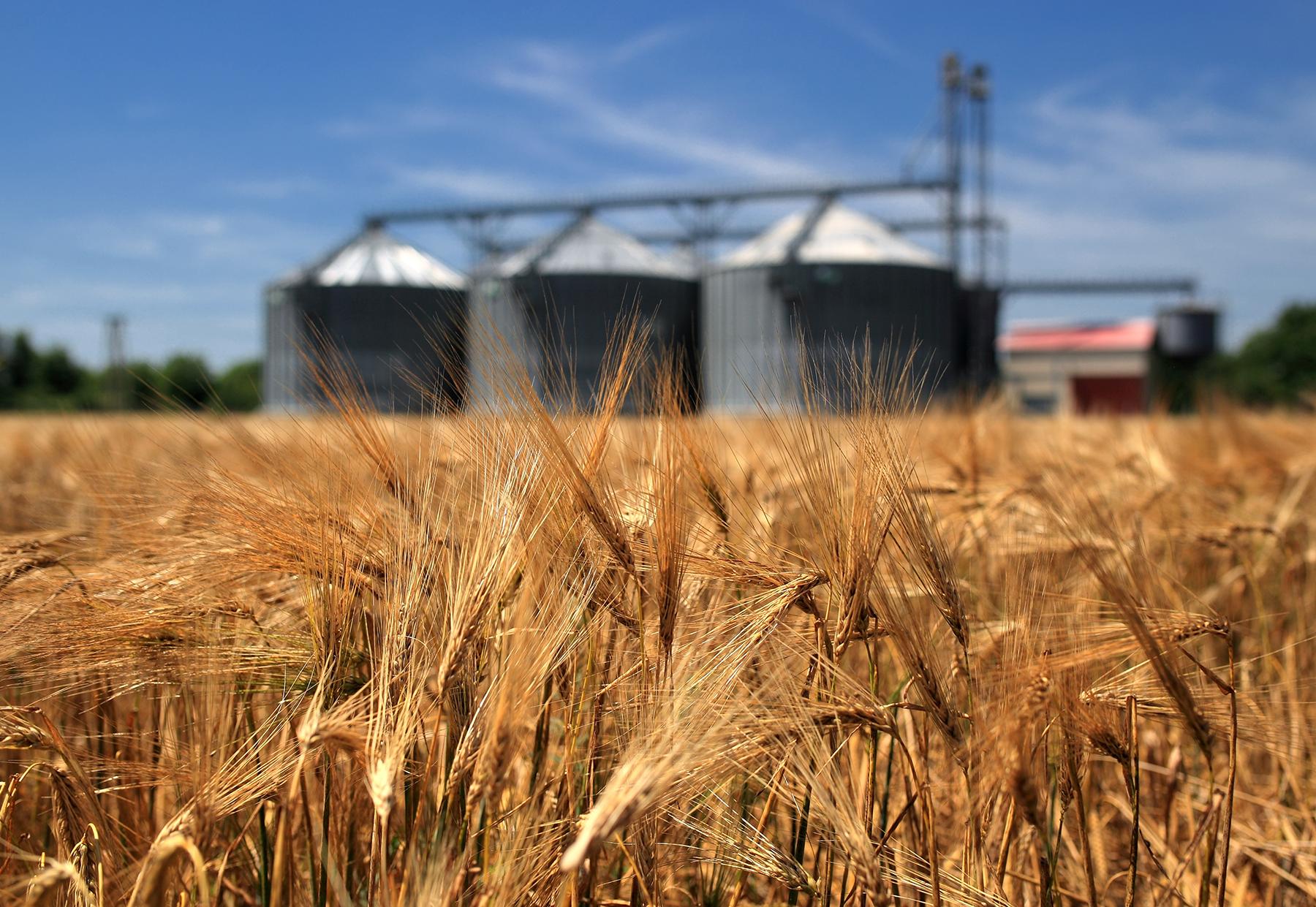 Bulk Bags for Wheat and Grain